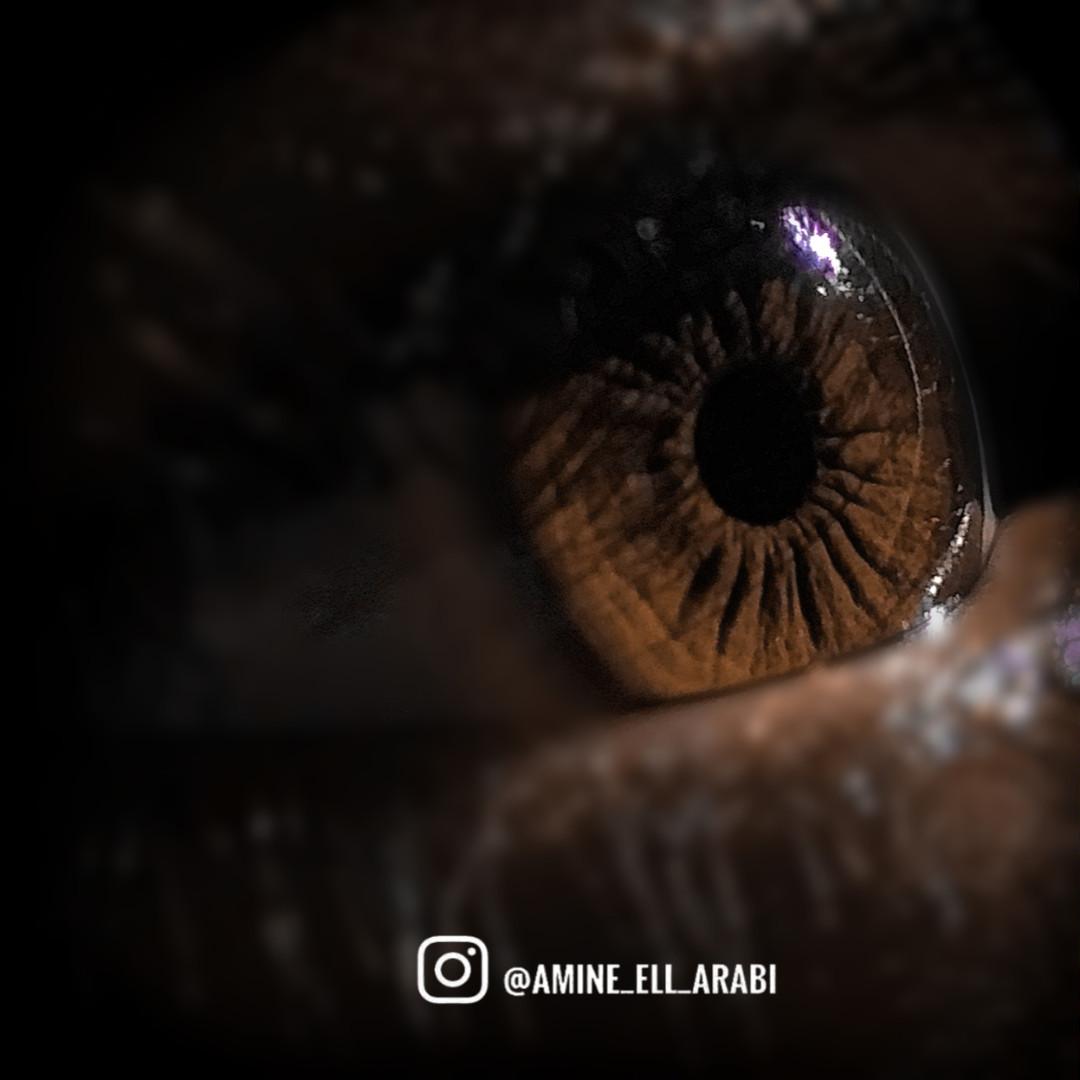 amine_ell_arabi