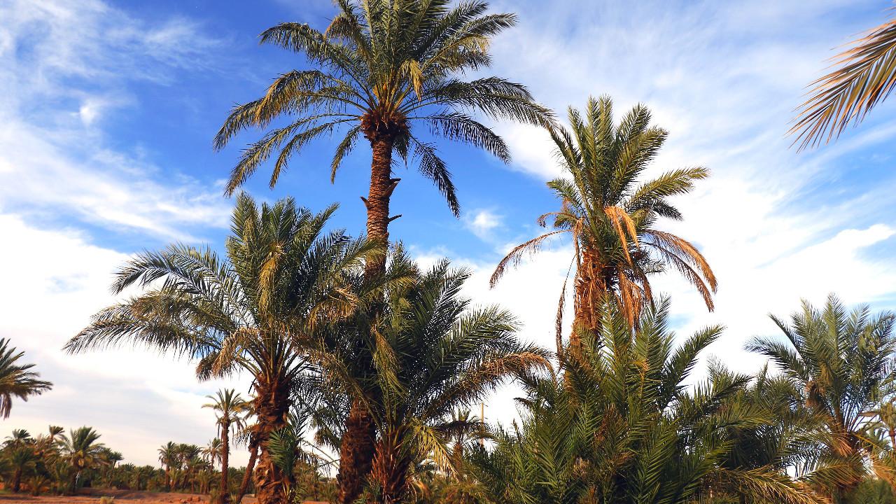 Ben Khelil, Zagora, Morocco ♡ in motion [Hight Quality]
