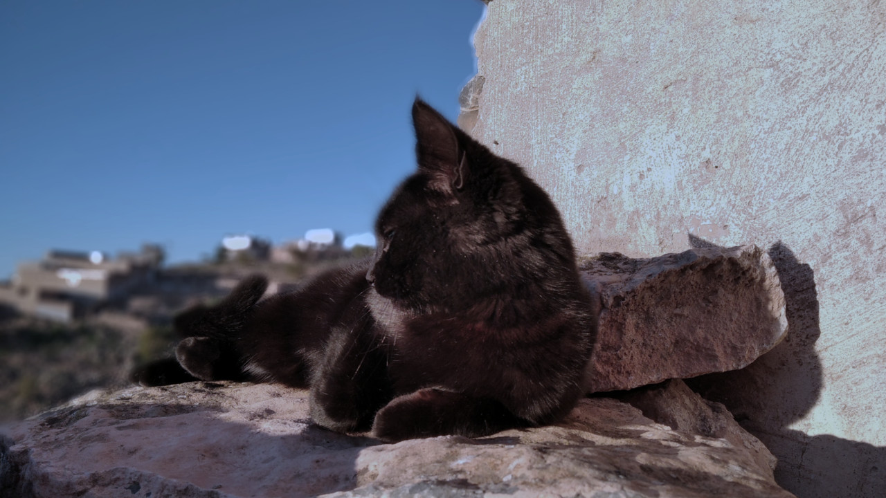 القطة المهمومة